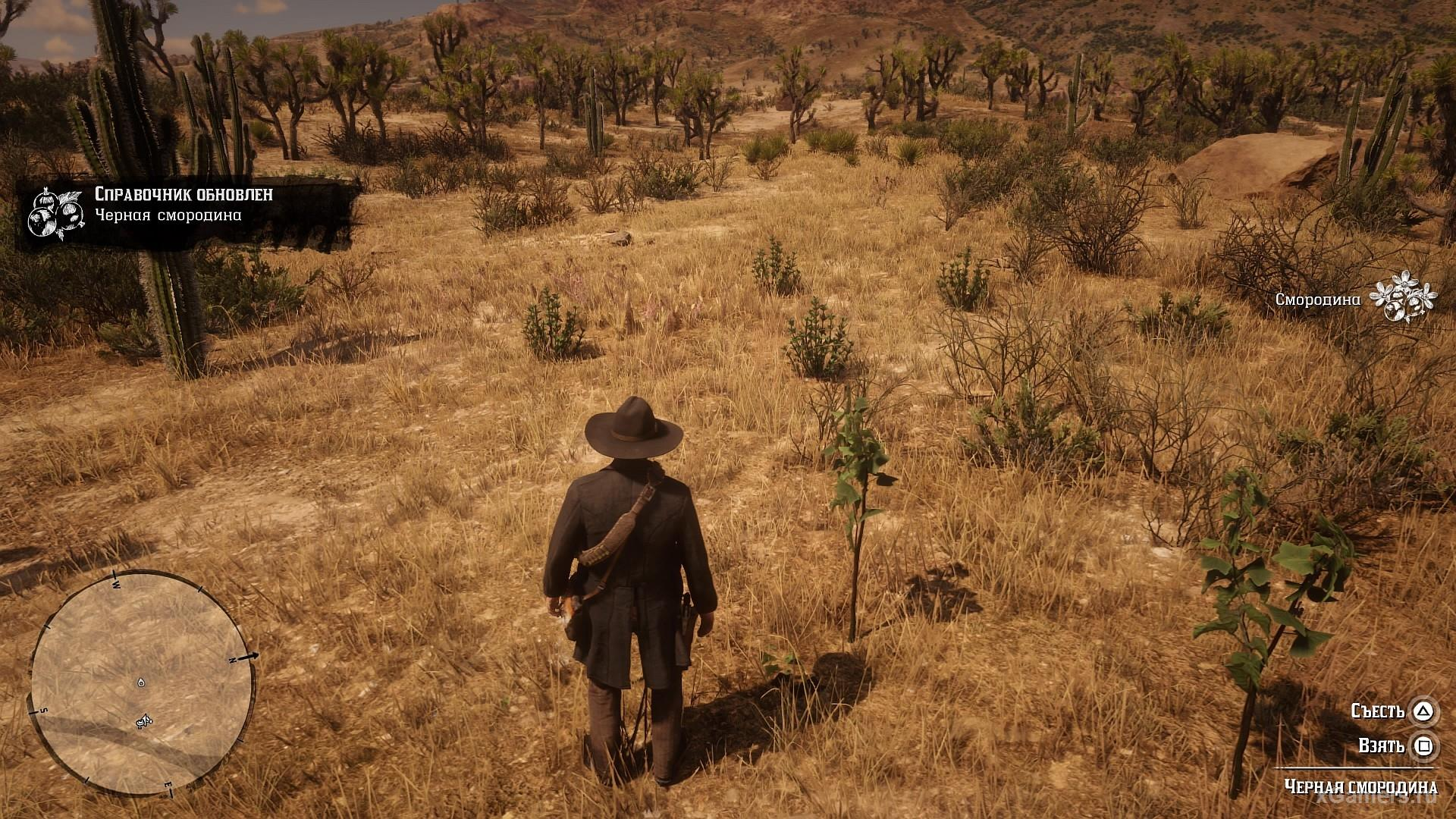Search for black currant in the game RDR 2